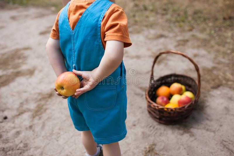 Child hide orange fruits picnic healthy concept. royalty free stock photo
