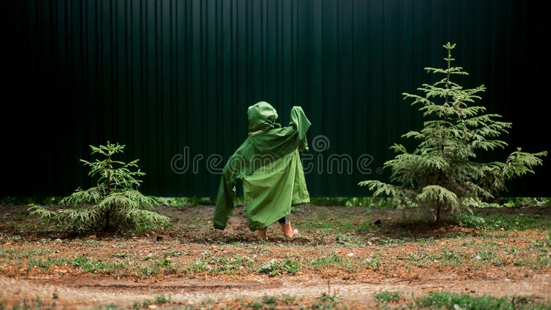 Child hide a spruce royalty free stock image