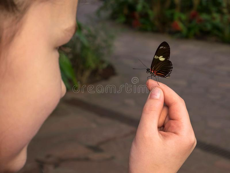 The child is holding a butterfly in his hands. royalty free stock images