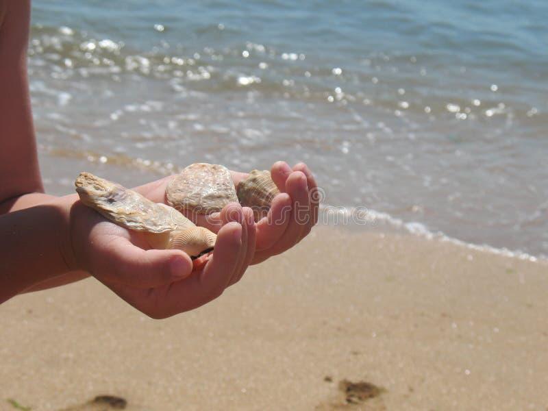 Child holding sea-shells stock photography