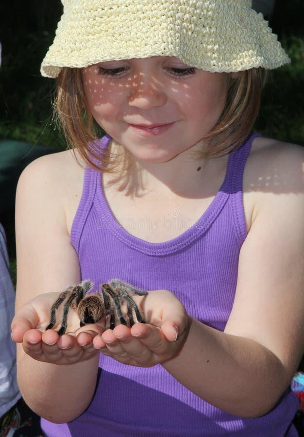 Child holding Tarantula stock photo