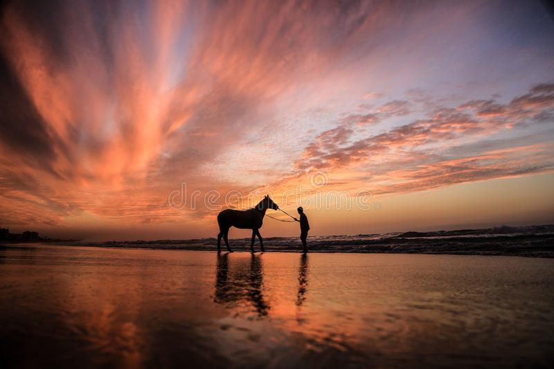 A child with a horse at sunset. Playing horse on the shore of the sea of Gaza City at sunset with horse royalty free stock images