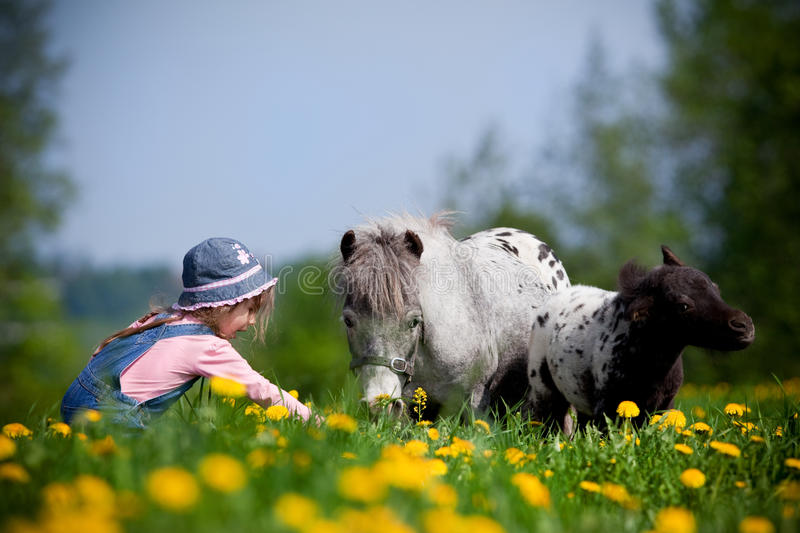 Child with horses in field stock image
