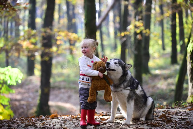 Child with husky and teddy bear on fresh air outdoor. Child play with dog in autumn forest.  stock photo