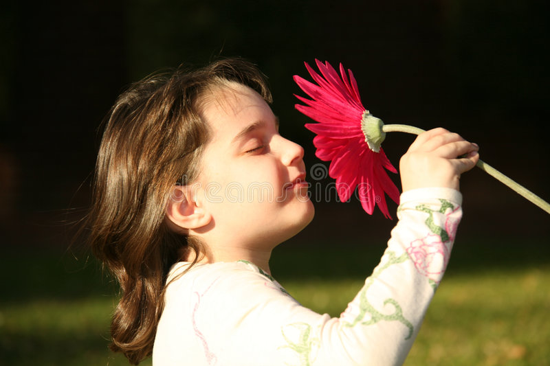 Child Innocently Smelling a Flower royalty free stock images