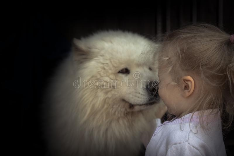 Child kid puppy dog husky care domestic animal concept animal love care friendship kindness stock photography