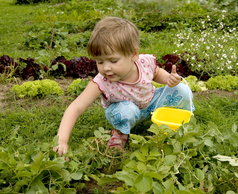 Child in kitchen garden stock image