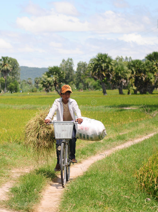 Child labor at Asia countryside. MEKONG DELTA, VIETNAM - JULY 25, 2014. Child labor at Asia countryside, a boy transports straw bag by bike from rice field royalty free stock photos