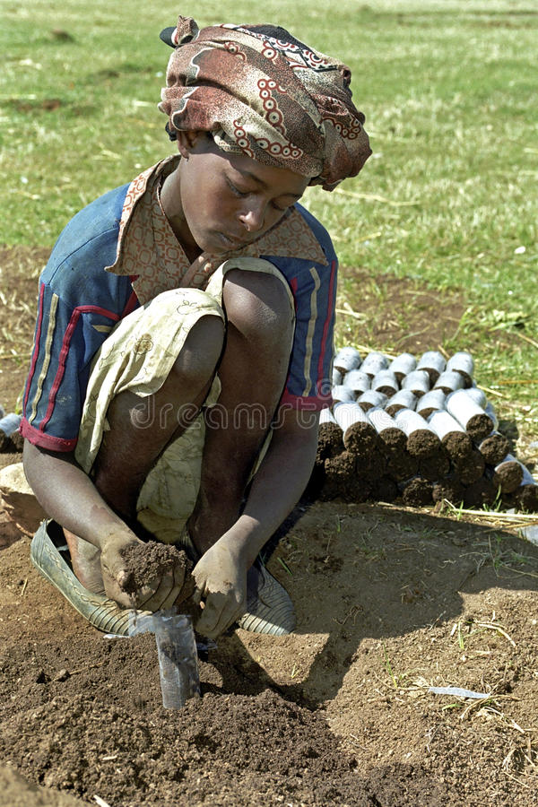 Child labor and reforestation, Ethiopia. Ethiopia, village CHANCHO Gaba Robi a small town in Mulo-ena Sululta woreda (district) of northern Shewa.: reforestation royalty free stock photography