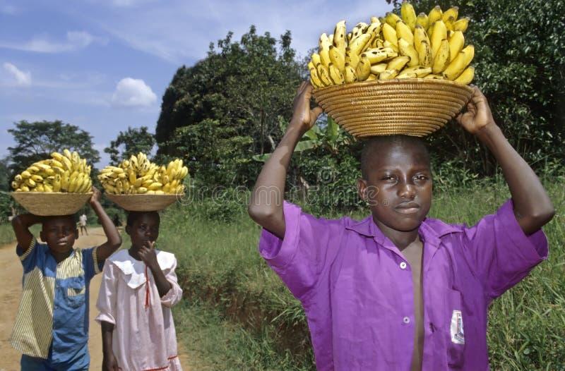 Child labor Ugandans carrying bananas royalty free stock photos