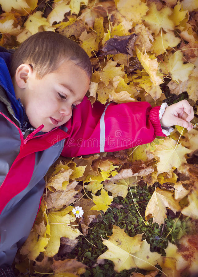 Child laying in autumn leaves royalty free stock photo