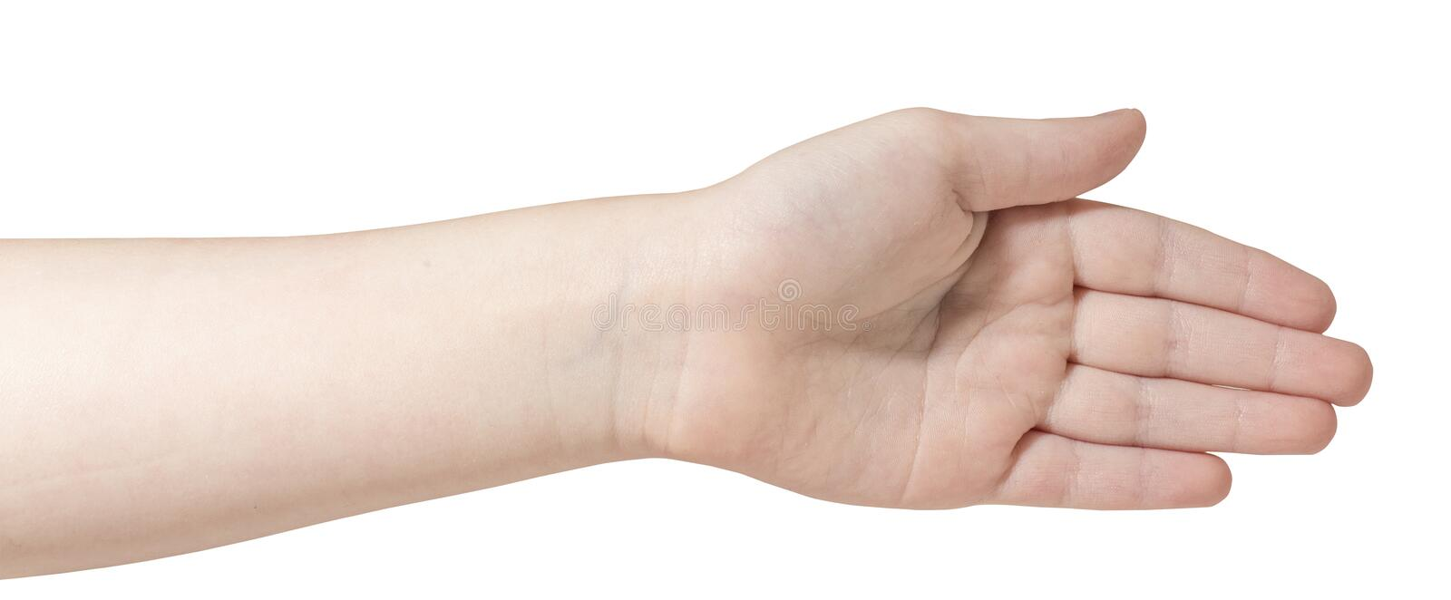 Child left hand isolated. On white background royalty free stock photography
