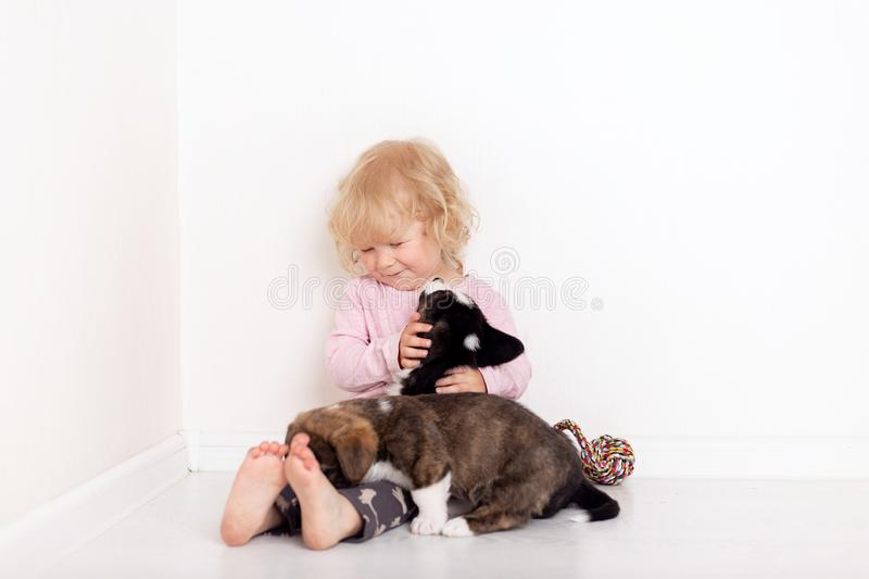 Child with little dogs playing at home. girl with puppies. baby girl kissing, hugging with puppy on white background stock photos