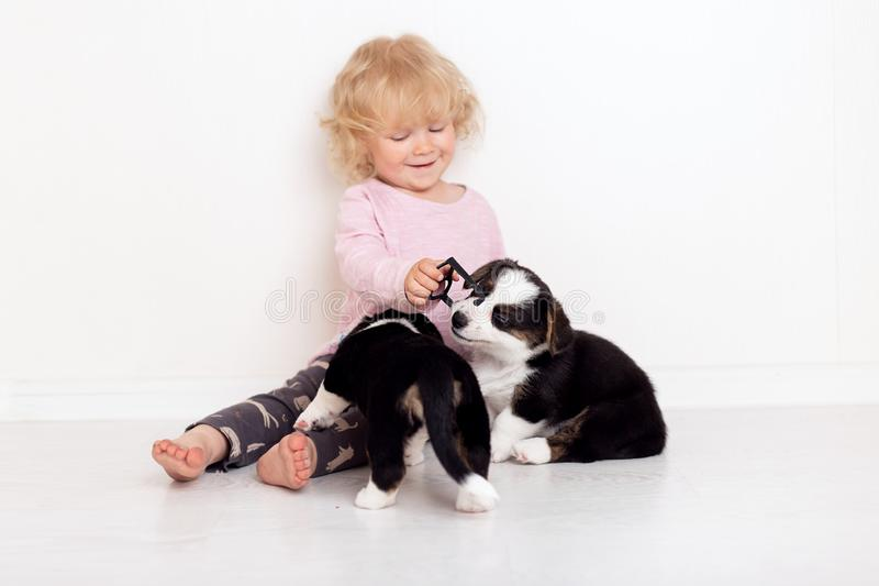 Child with little dogs playing at home. girl with puppies. baby girl kissing, hugging with puppy on white background royalty free stock image