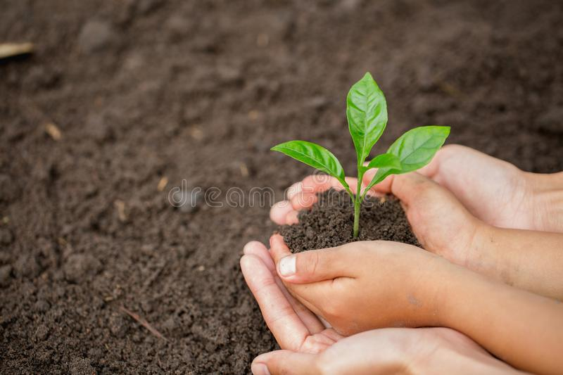 Child little girl and parent holding young plant in hands together as save world concept, plant a tree, World Environment Day. N stock photos