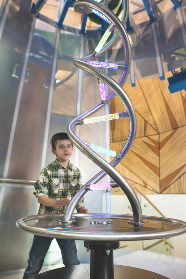Child looks at a DNA sculpture stock photography