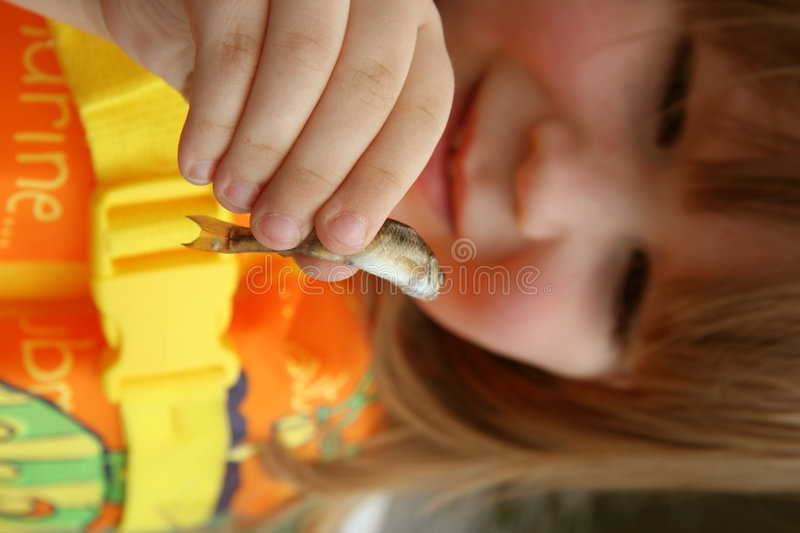 Child and minnow. A curious (and brave) child holds up a little catch. focus on the minnow stock photography