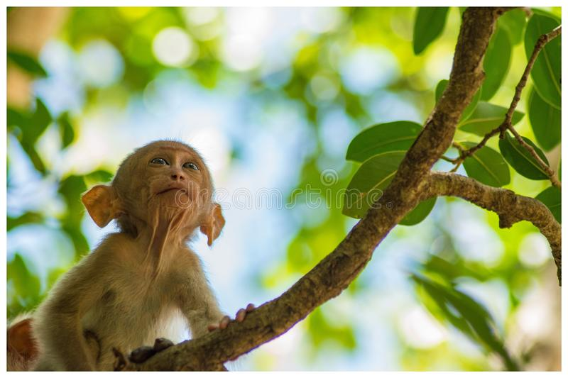 Child Monkey stock photography
