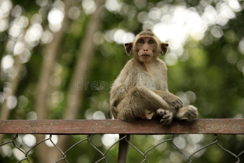Child of monkeys stock image