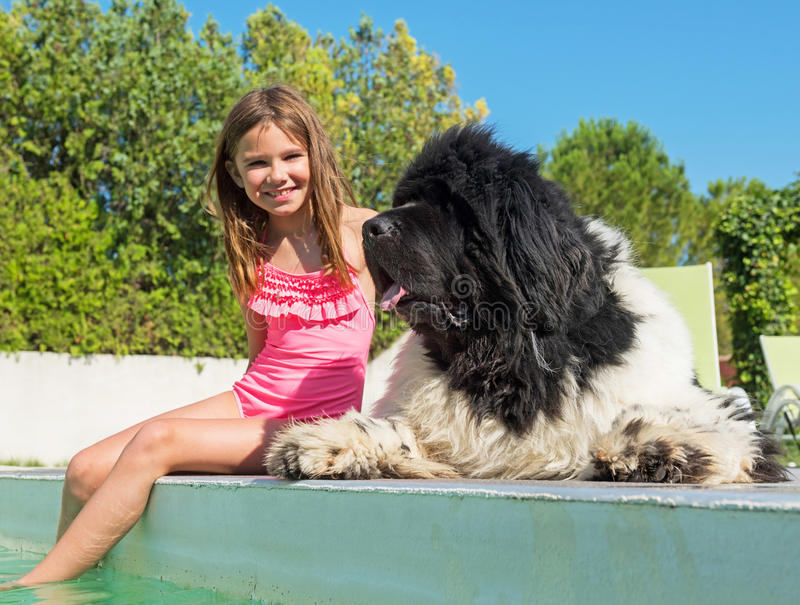 Child and newfoundland dog in swimming pool stock photo