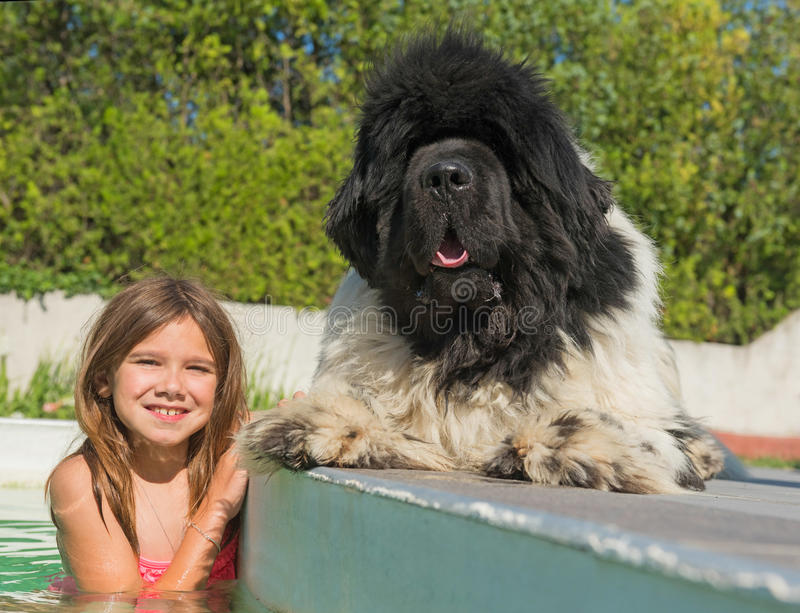 Child and newfoundland dog in swimming pool royalty free stock images