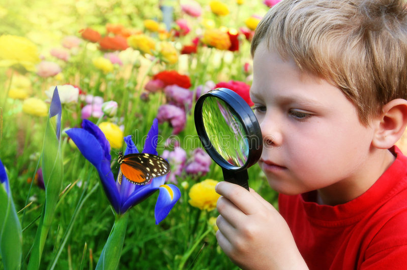 Child observing a butterfly royalty free stock image