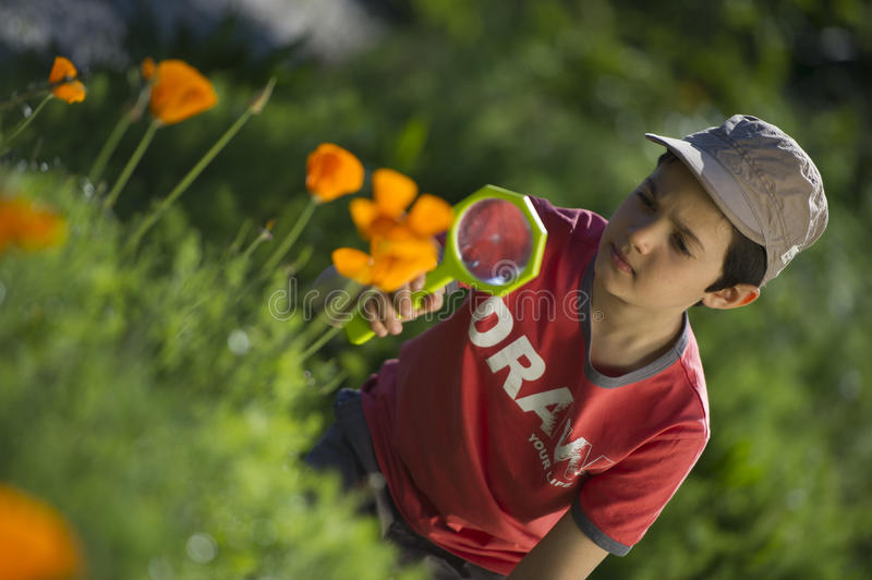 Child observing nature with a magnifying glass. In a park stock photography