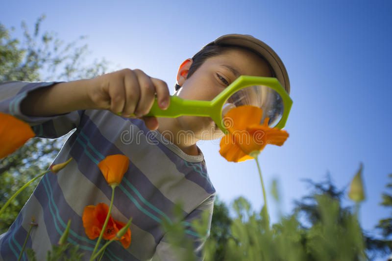 Child observing nature with a magnifying glass. In a park royalty free stock image