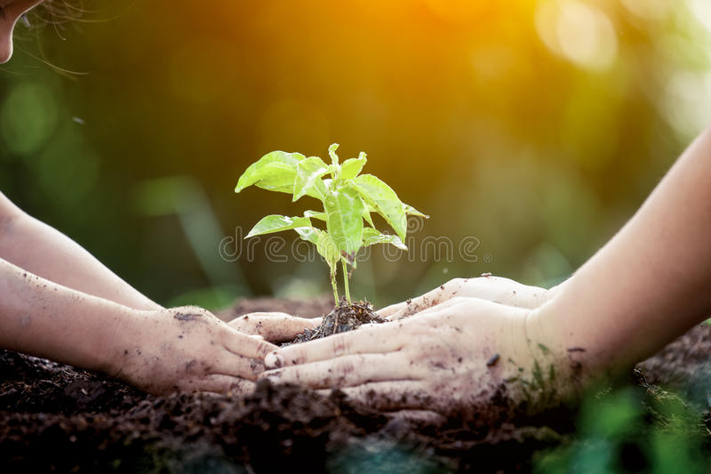 Child and parent hand planting young tree on black soil. Together as save world concept in vintage color tone royalty free stock photo