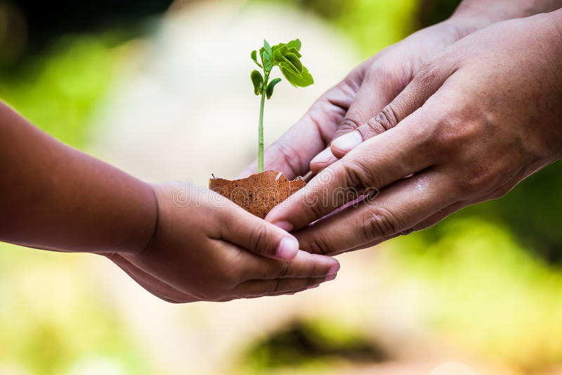 Child with parents hand holding young tree in egg shell together stock images