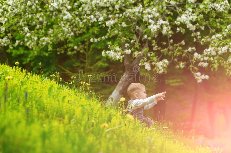 Child in park with blossoming dandelion flowers and trees. Spring and summer vacation. Healthy outdoor activity. Happy childhood concept. Boy sitting in green royalty free stock photography