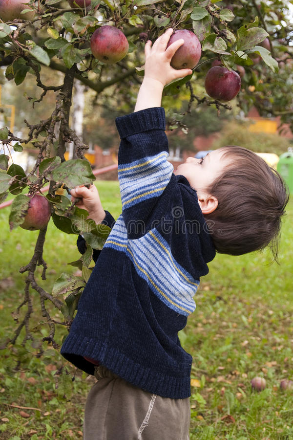 Free Child Picking Apple Stock Image - 18895541