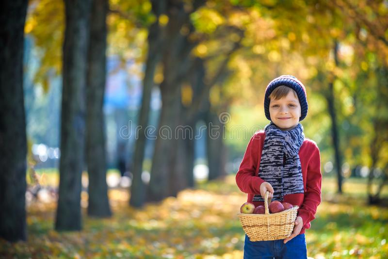Child picking apples in autumn. Little baby boy playing in apple stock photos