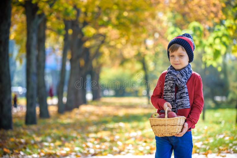 Child picking apples in autumn. Little baby boy playing in apple tree orchard. Kids pick fruit in a basket. Toddler eating fruits stock photos