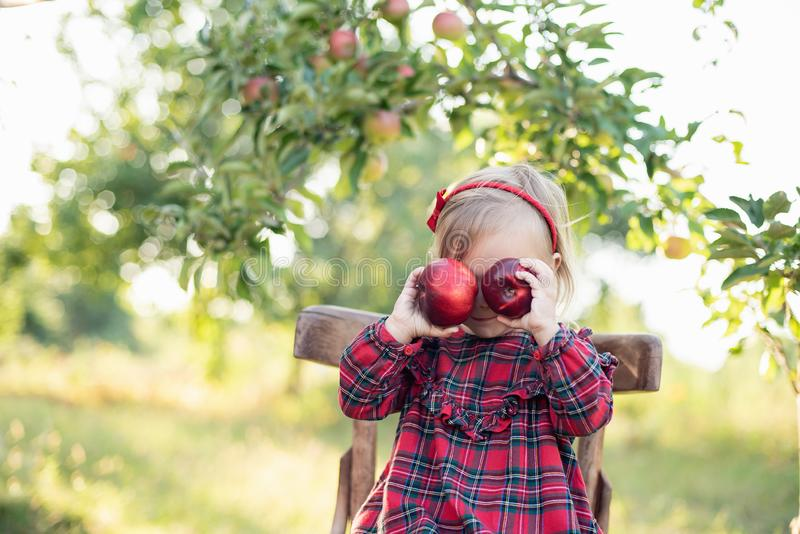 Child picking apples on farm in autumn. Little girl playing in apple tree orchard. Healthy nutrition stock photos