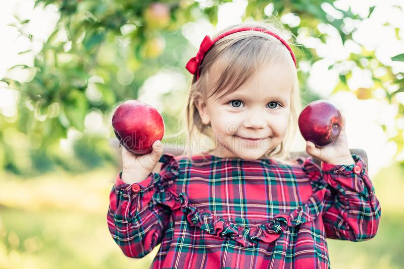 Child picking apples on farm in autumn. Little girl playing in apple tree orchard. Healthy nutrition royalty free stock photo