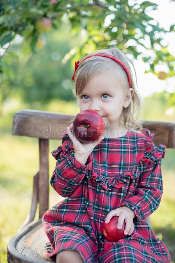 Child picking apples on farm in autumn. Little girl playing in apple tree orchard. Healthy nutrition royalty free stock photography