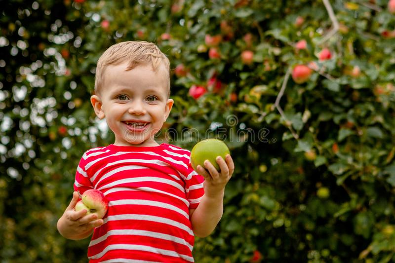 Child picking apples on a farm. Little boy playing in apple tree orchard. Kid pick fruit and put them in a wheelbarrow. Baby. Eating healthy fruits at fall royalty free stock photos
