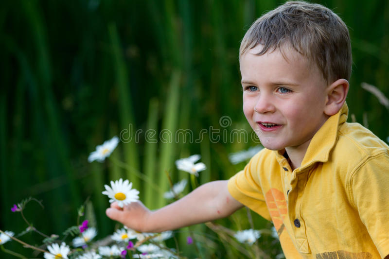 Child picking flowers royalty free stock images