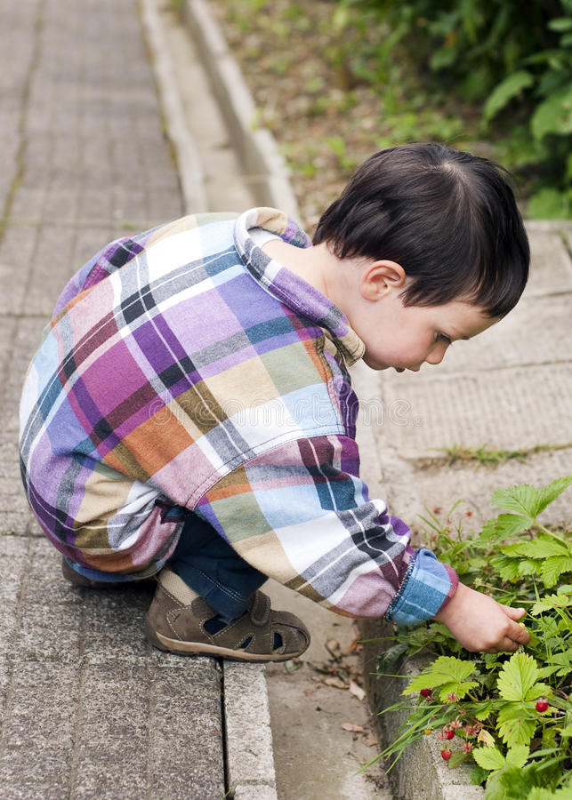 Download Child picking strawberries stock photo. Image of portrait - 20017488