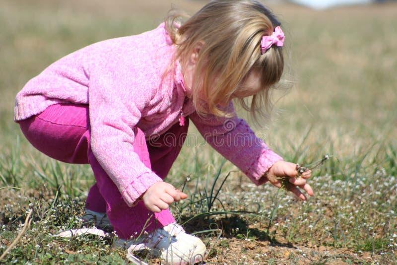 Child picking weeds stock image