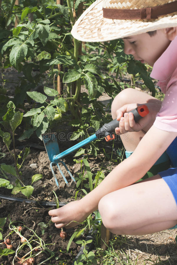 Child planting plans in a garden. Sunlight royalty free stock images