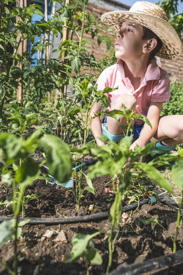 Child planting plans in a garden. Sunlight royalty free stock image