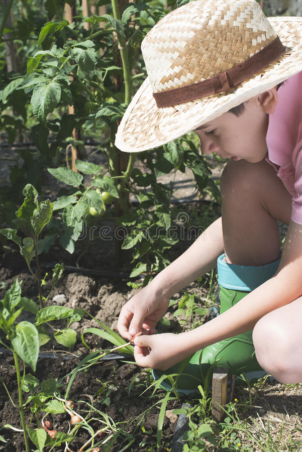Child planting plans in a garden. Sunlight royalty free stock photography