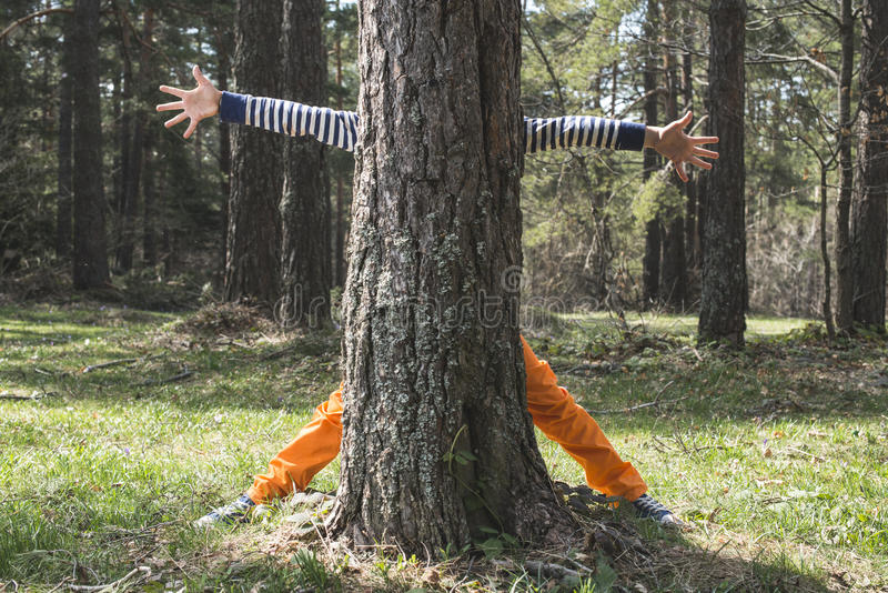 Child play in the forest. Hidden behind a tree stock photo