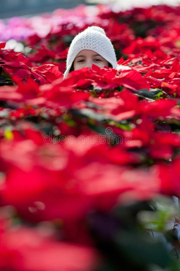 Child with poinsettias stock photo. Image of little ...