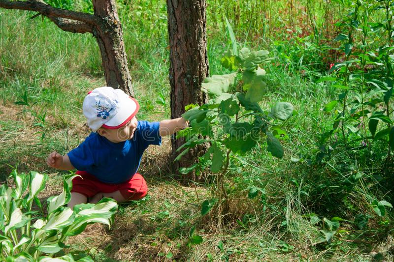 Child pulls the arm to the leaf on a tree branch. Little baby boy sitting on the ground and studying the plants around. Curious charming child pulls the arm to royalty free stock image