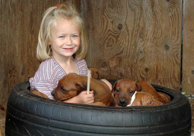 Child with puppies stock photo