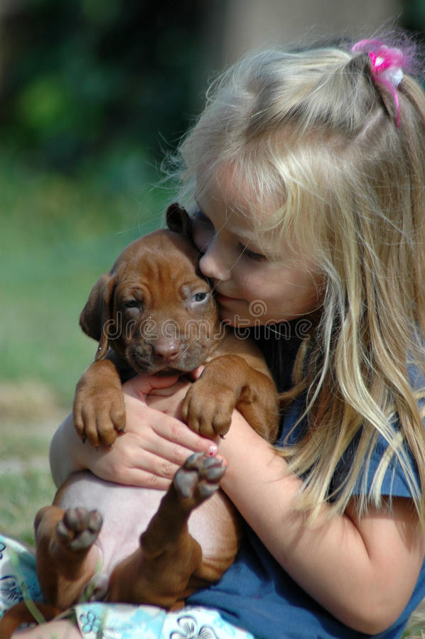 Child puppy love. A beautiful little Caucasian girl child holding, hugging and kissing her first very own cute Rhodesian Ridgeback hound dog puppy stock photography