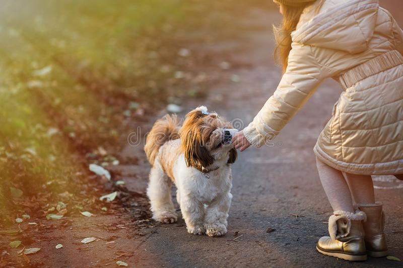 A child reaches out little dog. Child feeding a dog on the street. stock photo
